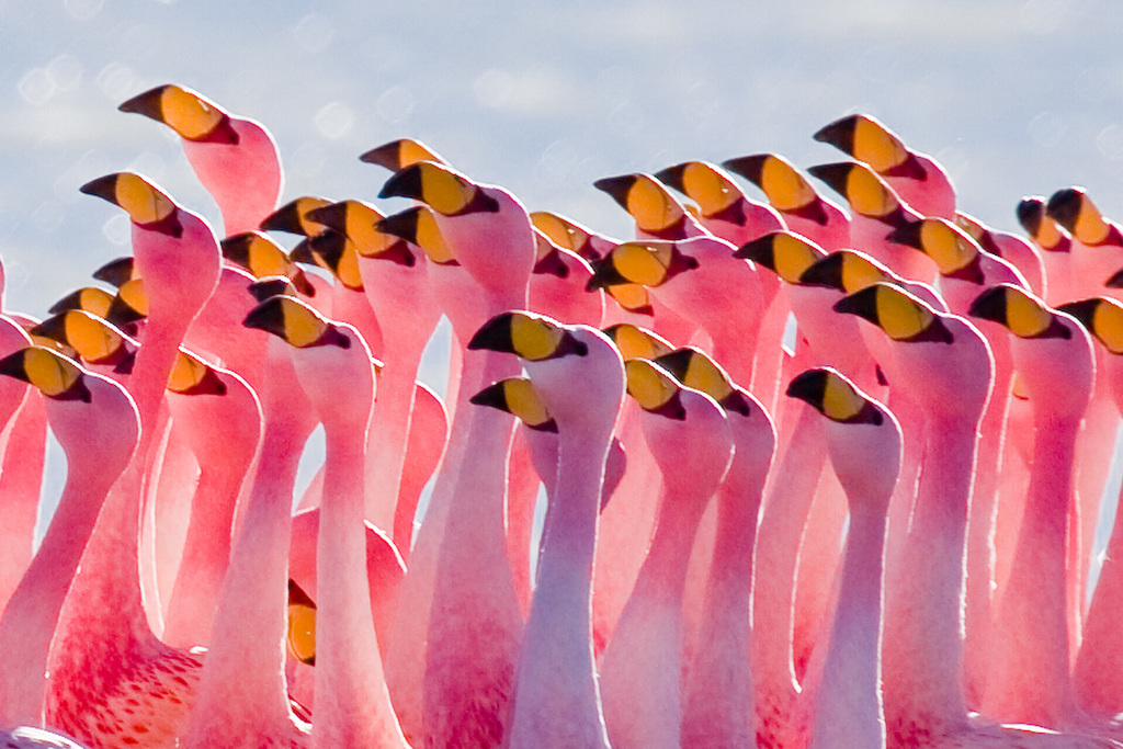 Flamingos Partying