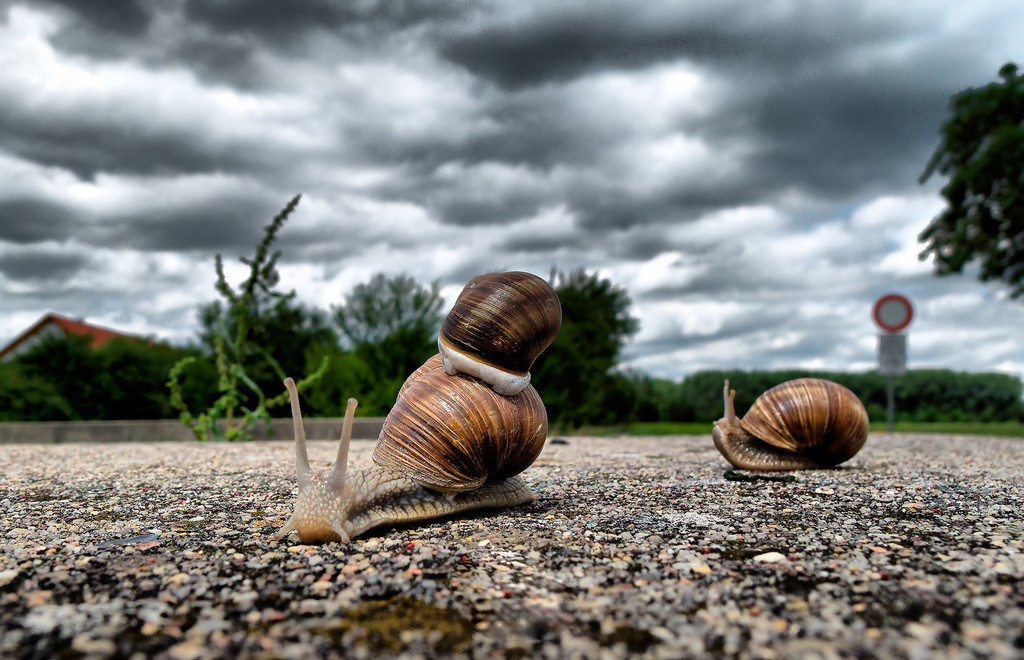 High resolution snails shot on the road