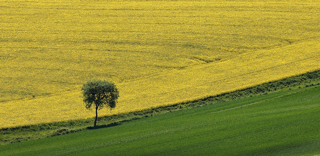 Minimal green and yellow field image
