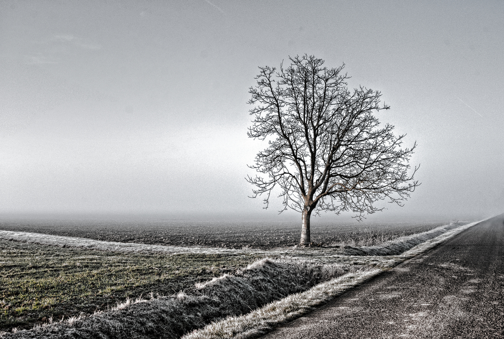 Minimal landscape with a tree image