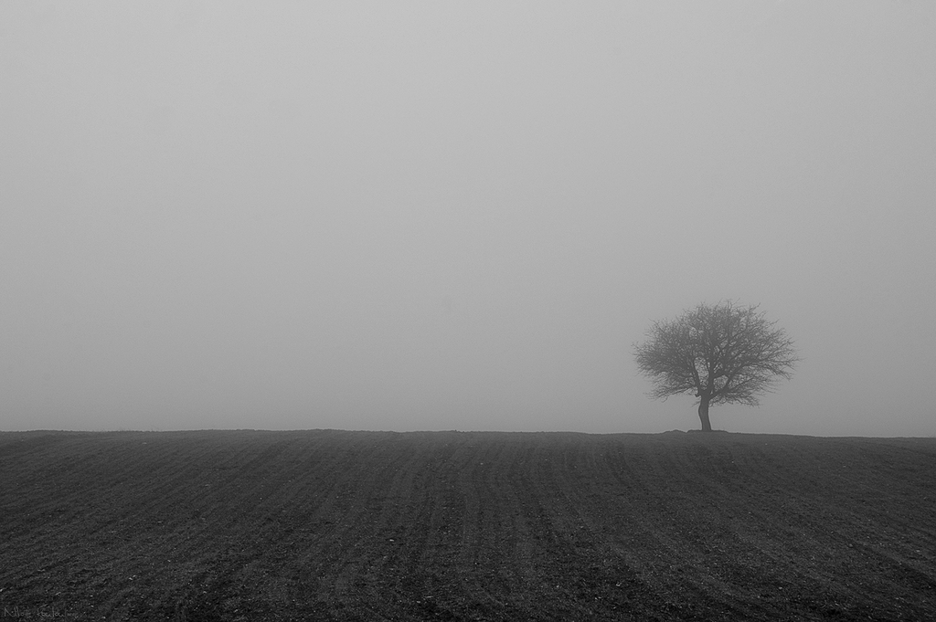 Minimal photo for a foggy landscape with a tree