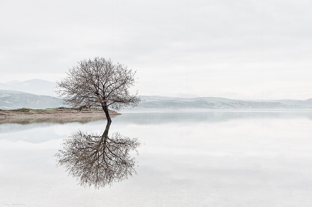 Tree eflection - Nikos Koutoulas
