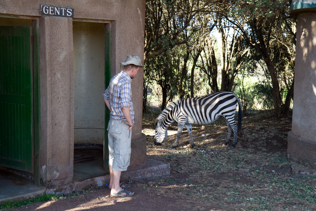 Zebra At The Simba Camp Site | High Resolution Photography